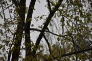 Men nå beveger vi oss ut mot odden og det sitter en fugl og synger så fint oppe i treet der
