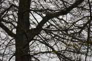 Men det er flere fugler oppe i trærne her