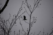 Plutselig fyker det opp en stor fugl, jeg var nok ikke stille nok