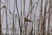 Men dette er nok en annen fugleart enn den vi så i sted