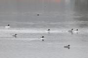 Det er mange fugler på Bogstadvannet i dag