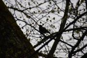 En litt større fugl dukker opp i treet der borte