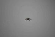 Vet ikke, men den hadde en Edderkopp på seg