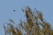 Men jeg fortalte dere også at det var nesten like mange fugler i lufta?