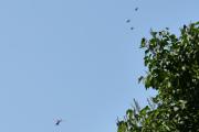 Morten 24 juli 2021 - LN-OFY hilser på oss på Høyenhall, her kom det tre store fugler og alt jeg klarer er og ta bilde av treet