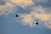 Morten 24 desember 2020 - To militær helikoptre over Høyenhall på juleaften. Det ser faktisk slik ut at de kommer hitover