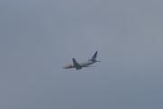 Mens vi spiser lunsj ser vi et SAS fly som flyr faretruende lavt og har retning mot et stort tre