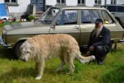 Irsk Ulvehund og en Renault 6