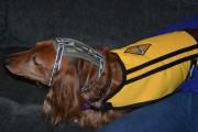 Molly jenta med Renault vest og hodebeskyttelse