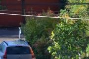 Renault Megane og en Nøttekråke i treet