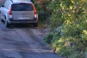Renault Megane og to Nøttekråker