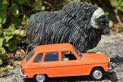 Renault og en Moskus på Dovregubbens hall
