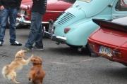 Renault og to hunder - Knut har ikke sakt hvilke enda