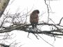 Knut og Morten – fugler, dyr og insekter 2016