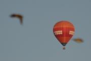 Morten 24 mai 2018 - Luftballong over Høyenhall, jaggu flyr det noen fugler rundt også