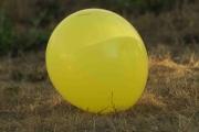 Knut 26 juli 2018 - Gaffel på ballong, jaggu er han kreativ