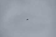 Morten 12 juni 2021 - Heliumballong over Høyenhall, og nå er den på vei over Østmarka uten og miste høyde