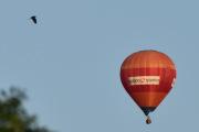 Morten 14 august 2019 - Luftballong over Høyenhall, men nå skal vi imponere litt, her tar vi den sammen med en Hegre