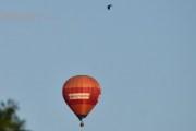 Morten 14 august 2019 - Luftballong over Høyenhall, dette er kun for å imponere Knut