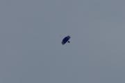 Morten 2 juli 2020 - 3 i fallskjerm over Oslo, litt blått, hvilket flagg kan det være