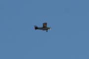 Morten 17 oktober 2020 - LN-AEW over Høyenhall, det er et Maule Aerospace MX-7-180 fra Nome Flyklubb