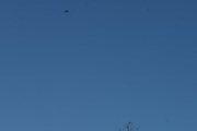 Morten 27 november 2020 - LN-NPZ over Høyenhall, her fikk jeg han med en fugl også selv om den ble liten