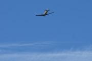 Morten 5 september 2020 - LN-TEX over Høyenhall, det er ikke så lett å holde tunga rett i munn når du skal dokumentere alle flyene, bilene, fuglene og dyrene i hele Hakkebakkeskogen
