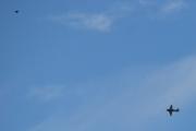 Morten 5 september 2020 - LN-TEX over Høyenhall, så her - jeg må prioritere, skal flyet eller fuglen være skarp?
