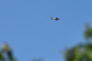 Morten 4 august 2021 - Piper over Høyenhall, jeg trodde først at det var jagerflyet som kom igjen