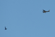 Morten 10 juni 2021 - Ukjent fly over Høyenhall, og jeg fikk deg med en fugl også