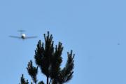 Morten 12 juni 2021 - Småfly over Høyenhall, jeg fikk den med en fugl da, selv om det ble treet :-)