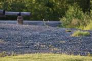 Fredag - Egentlig står jeg her for å ta bilde av Harepus, men det fikk jeg ikke til
