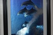 Gammelt Delfin bilde i ramme