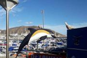 Tinamor for tilsendt et bilde av Delfin og to duer fra Puerto Rico