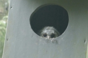 Knut har endelig funnet en ugle til Tina